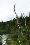 蒙大拿` s冰川国家公园 免版税库存照片