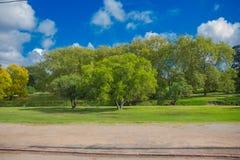 蒙得维的亚,乌拉圭- 2016年5月04日:好的大树在有有些云彩的一个公园在作为背景的蓝天 免版税库存图片