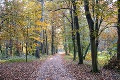 蒙扎意大利:秋天的公园 库存照片