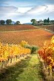 蒙泰法尔科地区,翁布里亚,意大利 葡萄园在秋天 库存照片