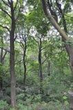 蒙特利尔, 6月27日:皇家山公园从蒙特利尔的魁北克省的 库存照片