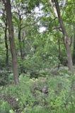 蒙特利尔, 6月27日:皇家山公园从蒙特利尔的魁北克省的 库存图片
