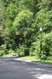 蒙特利尔, 6月27日:皇家山Alee公园从蒙特利尔的魁北克省的 免版税库存图片