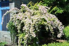 蒙特利尔botanial庭院 库存照片
