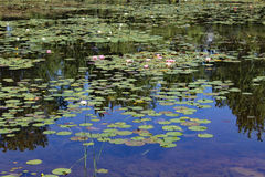 蒙特利尔botanial庭院 免版税库存照片