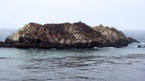 蒙特里,加利福尼亚,美国- 2014年10月6日:鸟岩石是其中一沿17英里驱动的最普遍的中止 免版税库存照片