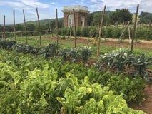 蒙蒂塞洛的菜园 免版税库存图片