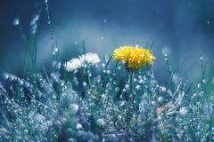 蒲公英和雏菊在雨中反对蓝色背景 美好的艺术作品 免版税库存图片