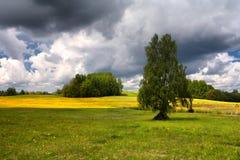 蒲公英的领域在一个夏日的与云彩 库存照片