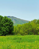 蒲公英领域和Mt Greylock 库存图片
