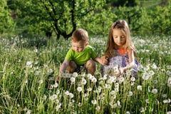 蒲公英领域白女孩男孩愉快的一点婴孩绿色草甸黄色开花蒲公英自然公园庭院两家庭姐妹汤 库存照片