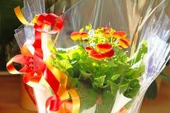蒲包花属植物花 库存图片