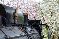 蒸汽机车和樱桃树 免版税库存图片