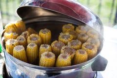 蒸汽玉米棒子 库存图片