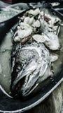 蒸汽鱼和辣石灰调味汁 免版税库存照片