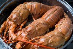 蒸汽龙虾 免版税库存图片