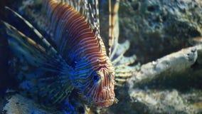 蓑鱼 影视素材