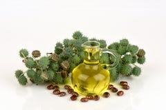蓖麻油瓶用铸工果子、种子和叶子 免版税库存照片