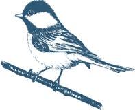 蓝冠山雀印刷品 免版税库存图片