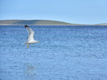 蓝天、海洋、海岛和剥皮的海鸥 免版税库存照片