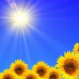 蓝天向日葵 免版税图库摄影