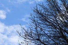 蓝天和云彩与树枝在冬天 库存图片