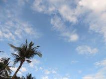 蓝天和偏僻的树 库存照片