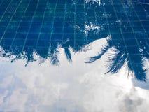 蓝天和叶子的水反射 免版税库存图片