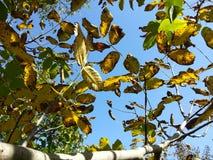 蓝天和叶子 免版税图库摄影
