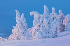蓝天和在日落的积雪的结构树 免版税库存照片