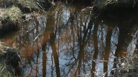 蓝天和春天森林反射在河 股票视频