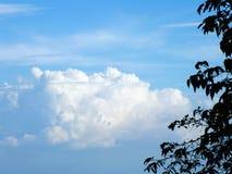 蓝天和树枝绿化自然抽象背景 免版税库存图片