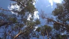 蓝天和白色云彩、树在森林里,和平和沉寂 股票录像