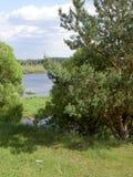 蓝天和白色云彩在河上在杉木和豪华的绿色布什之间 免版税图库摄影