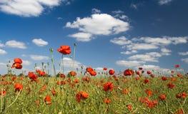 蓝天和红色鸦片领域 免版税库存照片