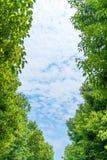 蓝天和绿色结构树 库存照片