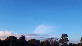 蓝天和结构树 免版税库存照片