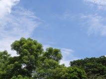蓝天和绿色与云彩的叶子树在夏天backgr期间 免版税库存照片