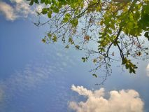 蓝天和绿色叶子背景 库存照片