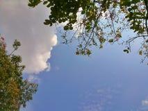 蓝天和绿色叶子背景 免版税库存图片