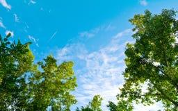 蓝天和绿色树 免版税库存图片