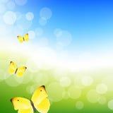 蓝天和蝴蝶 免版税库存照片
