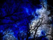 蓝天在森林里 免版税库存照片