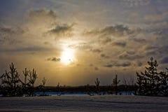 蓝天日落,常青森林风景 免版税图库摄影