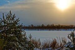 蓝天日落,常青森林风景 库存照片