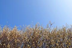 蓝天春天结构树 免版税库存照片
