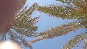 蓝天棕榈树 免版税库存图片