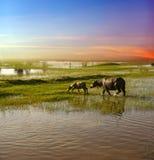 蓝天沼泽地背景镜象 库存照片