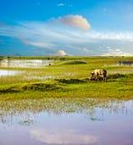 蓝天沼泽地背景镜象 免版税图库摄影
