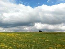 蓝天白色云彩雪山绿色草原黄色花 免版税库存图片